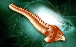Espinal medula