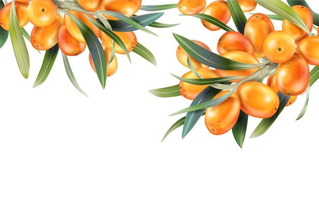 Espinheiro-mar isolado no branco. ilustração em estilo 3d. o conceito de imagem realista de plantas medicinais, ervas.