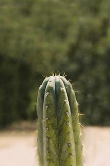 Espinho cravado sobre a planta do cacto saguaro