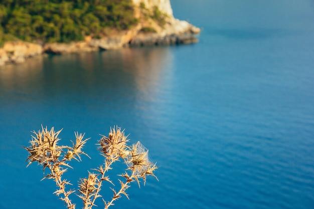 Espinho de flores secas com mar azul-turquesa ao fundo, vale de kabak