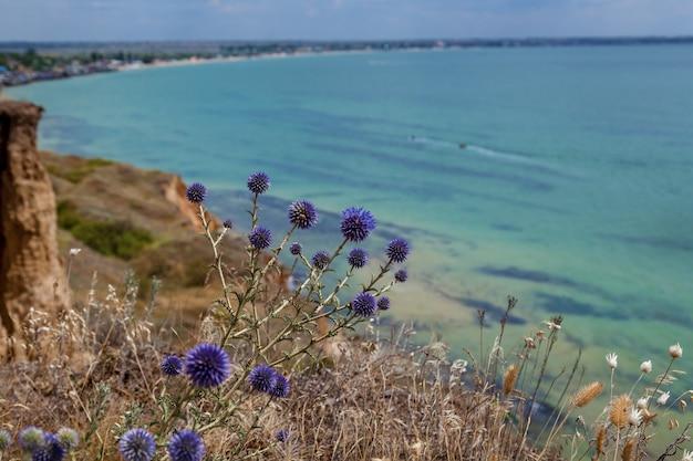 Espinhos de azuis no fundo do mar azul-turquesa. céu azul e água turquesa.