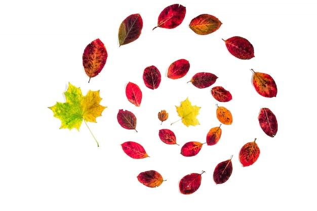 Espiral de folhas de outono isolado no branco