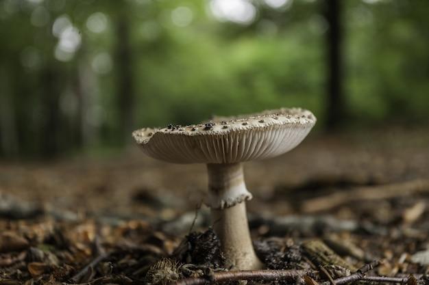 Esporos de cogumelos na floresta