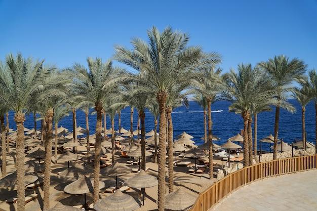 Espreguiçadeiras de verão sob um guarda-chuva na praia de areia do mar e as palmas das mãos no hotel