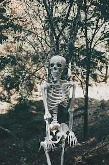 Esqueleto assustador na floresta ensolarada