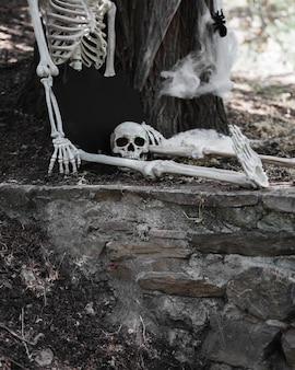Esqueleto com cabeça desconectada sentado na floresta