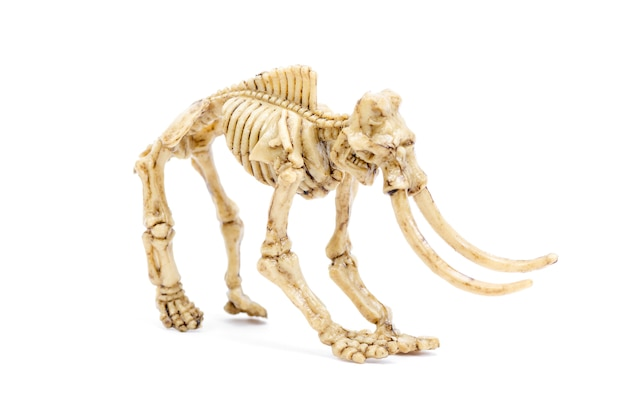 Esqueleto de dinossauro para educação científica
