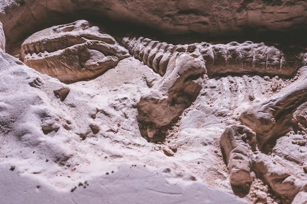 Esqueleto de dinossauro. tyrannosaurus rex simulador fóssil em pedra de chão.
