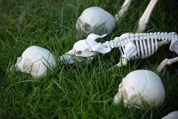 Esqueleto de halloween de um cachorro assustador, crânio saindo do chão.