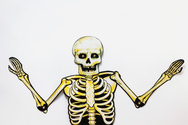 Esqueleto de papelão no fundo branco