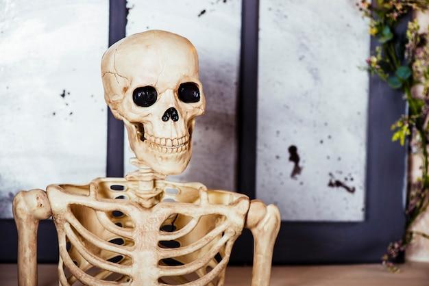 Esqueleto decorativo em estúdio