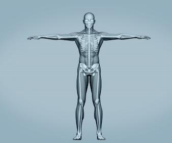 Esqueleto digital cinzento em pé