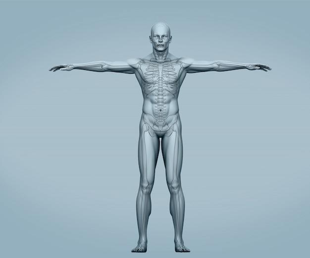 Esqueleto digital do corpo cinza com músculos