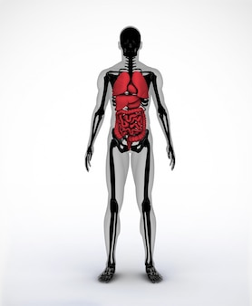 Esqueleto digital preto e cinza com órgãos visíveis
