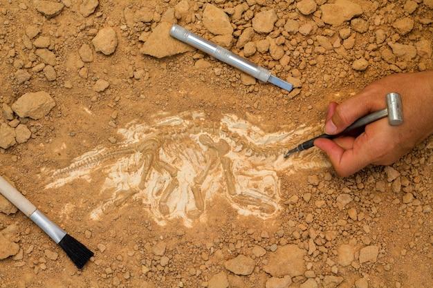 Esqueleto e ferramentas arqueológicas