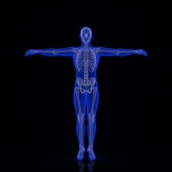 Esqueleto humano. ilustração 3d contém o traçado de recorte