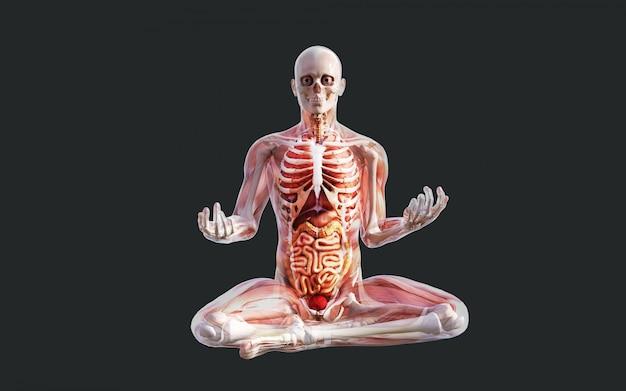 Esqueleto humano, músculo, sistema, osso, e, sistema digestivo, com, caminho cortante