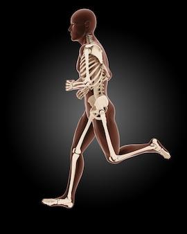 Esqueleto médico masculino movimentando-se