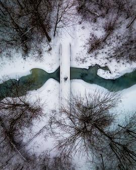 Esqui cross country na floresta