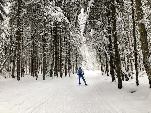 Esquiador esquiando entre pinheiros cobertos de neve na floresta. esporte de inverno e estilo de vida ativo e saudável