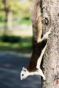 Esquilo adorável na árvore