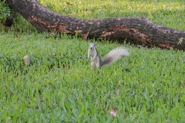 Esquilo brincando em um jardim botânico