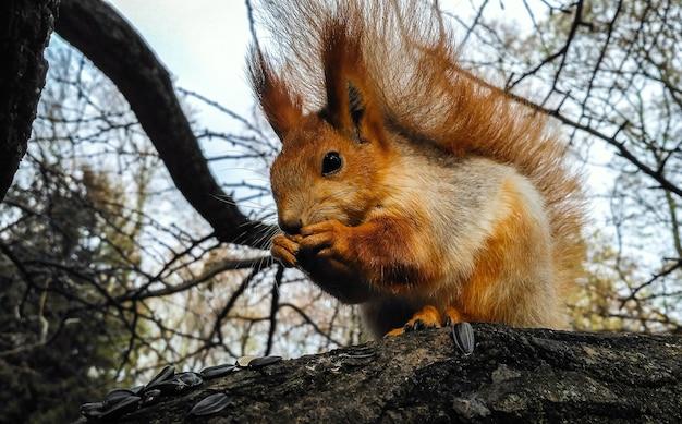 Esquilo comendo sementes em uma árvore no parque