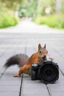 Esquilo e câmera