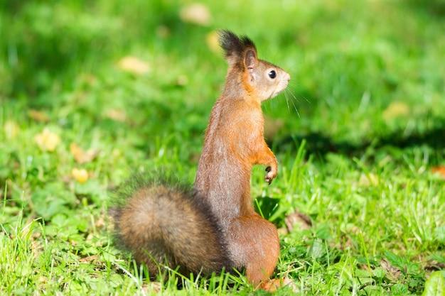 Esquilo em um galho