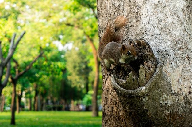 Esquilo, escalando, árvore, parque thr