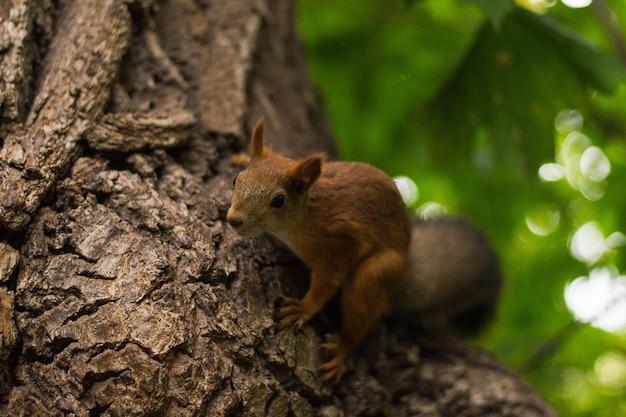 Esquilo fofo fofo senta-se em uma árvore e olha para a lente da câmera
