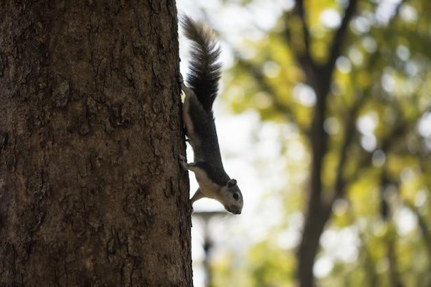 Esquilo, ligado, árvore, com, bokeh, fundo