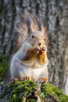 Esquilo, ligado, um, árvore