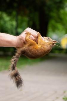 Esquilo mordeu minha mão