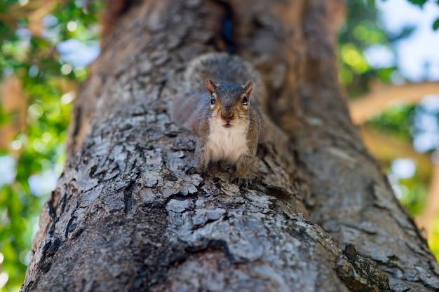 Esquilo na árvore do parque