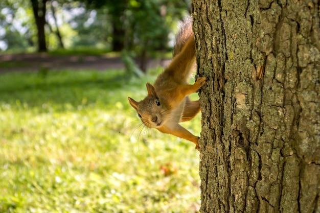 Esquilo na árvore. um pequeno animal no parque.