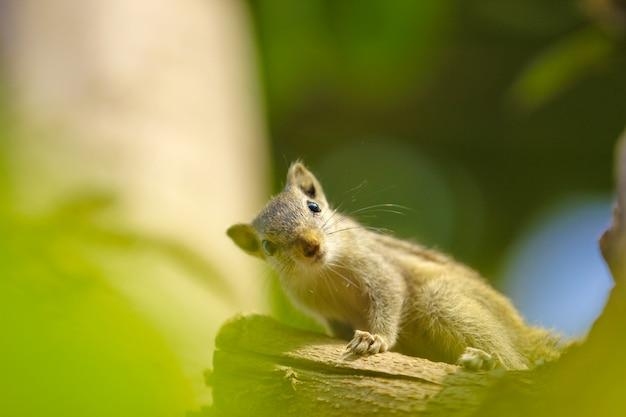 Esquilo na árvore