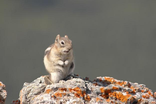Esquilo na rocha