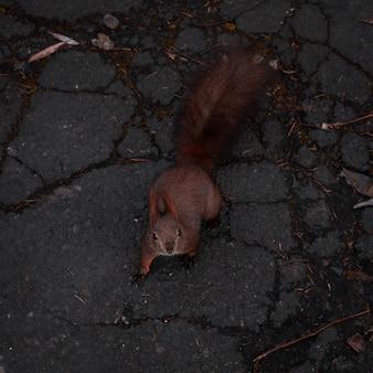 Esquilo no chão