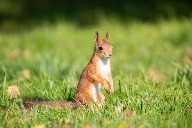 Esquilo sentado em um galho no parque