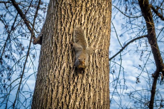 Esquilos em uma árvore em um parque, boston, eua