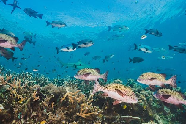 Esta área abriga uma extraordinária biodiversidade marinha