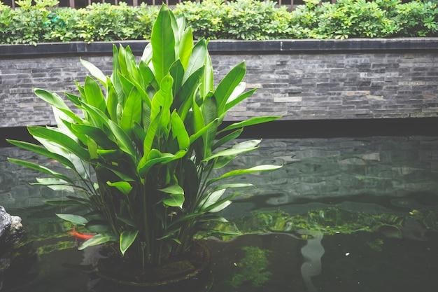 Estações de tratamento de água verdes frescas na lagoa