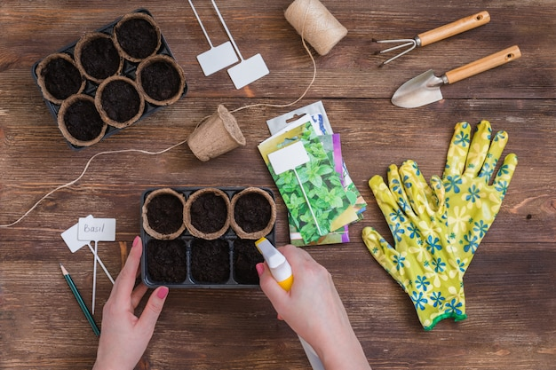 Estágios de plantio de sementes, mãos de mulher pulverizando água no solo em vasos orgânicos