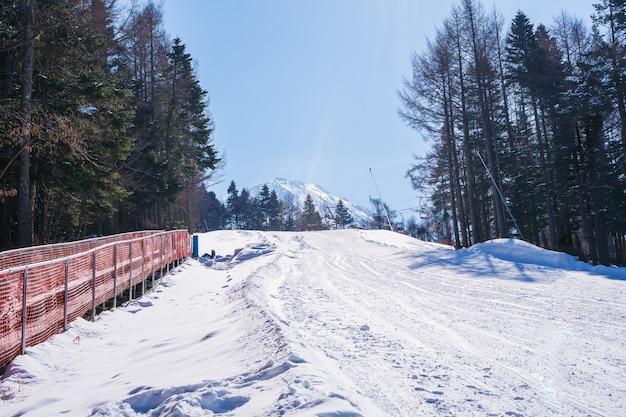 Estância de esqui de montanha de vale de neve com pinheiros e mt. vista de fuji em dia ensolarado