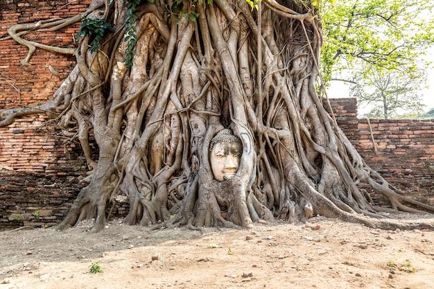 Estátua da cabeça de buda de ayutthaya em raízes de árvores