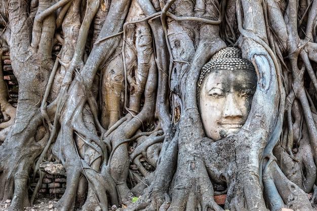 Estátua da cabeça de buda de ayutthaya nas raízes de uma árvore no templo wat mahathat na tailândia