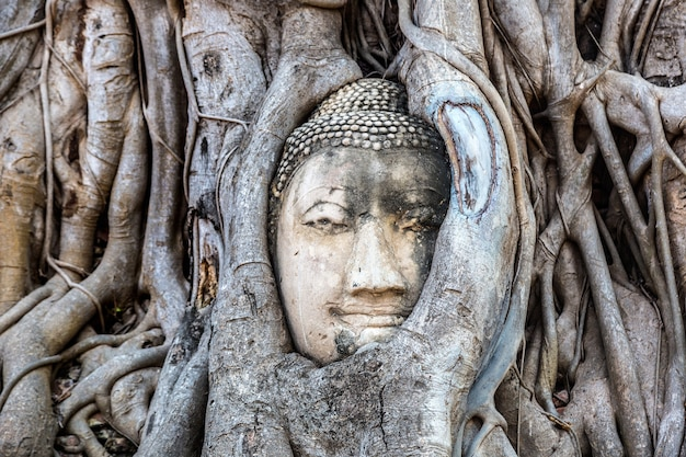 Estátua da cabeça de buda de ayutthaya nas raízes de uma árvore, templo wat mahathat, tailândia