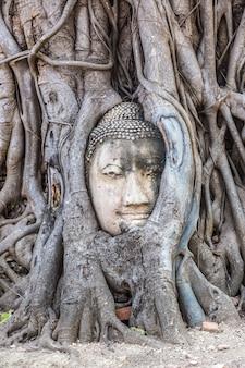 Estátua da cabeça de buda de ayutthaya nas raízes de uma árvore, templo wat mahathat, tailândia Foto Premium
