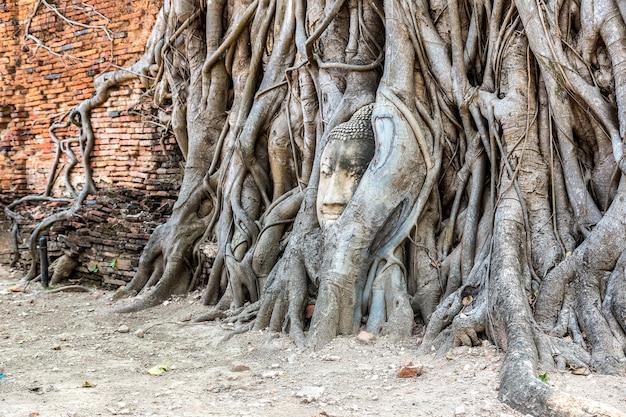 Estátua da cabeça de buda de ayutthaya nas raízes de uma árvore
